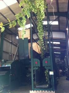 Hop Picking Machine